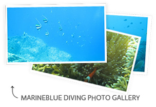 MARINEBLUE DIVING PHOTO